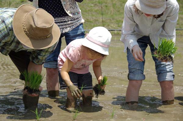手植えでの田植えイベントのようす