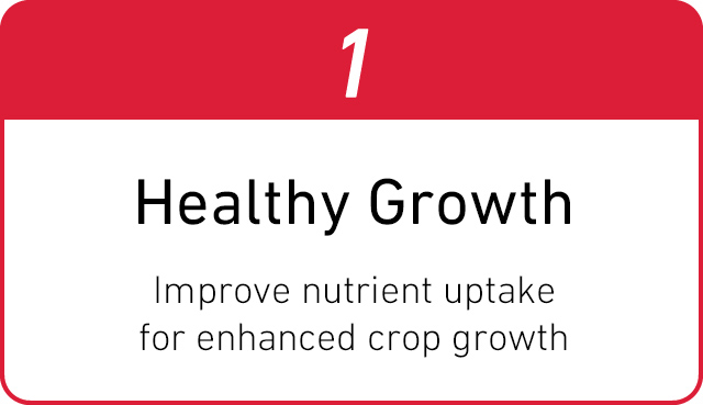 1. Healthy Growth Improve nutrient uptake for enhanced crop growth