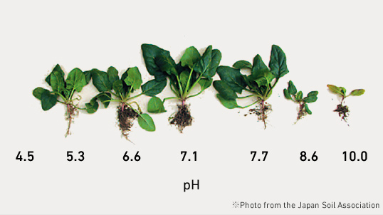 Incorrect pH levels will Affect Plant Growth