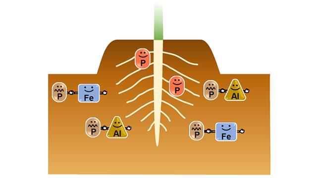 窒素 リン 酸 カリ
