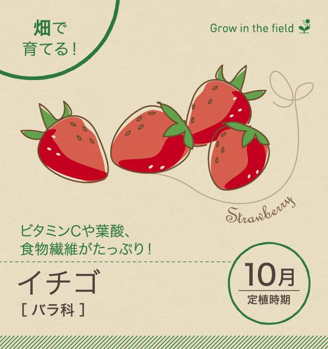 いちご 野菜