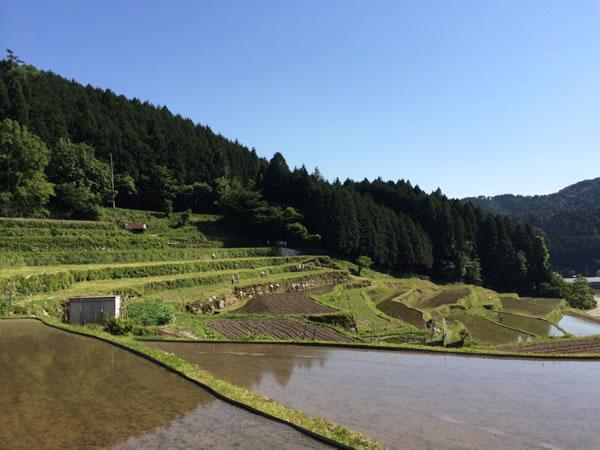 田植えイベントで使用される高山地区の棚田