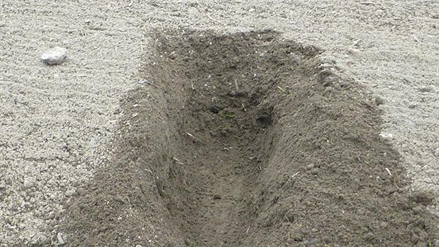 15cmほど掘り下げてみてもフカフカの土が出てくる。