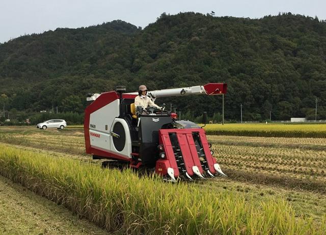 酒米の収穫風景