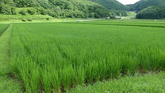 蛍が住むほど清らかな水が流れ、水田が広がるのどかな京の山里・南丹市日吉町。