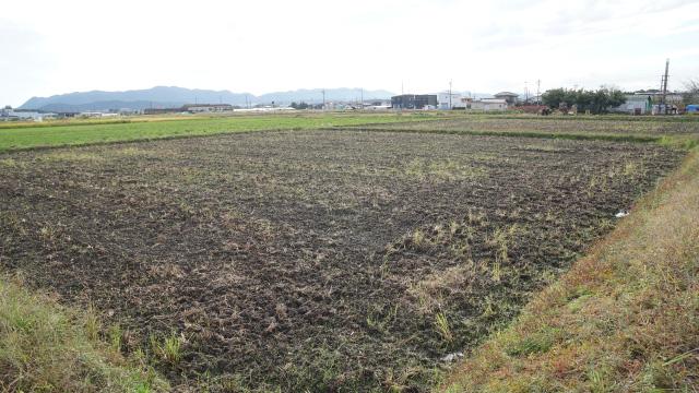 この10aのほ場でコシヒカリを密苗で栽培。