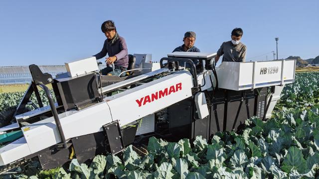 ブロッコリー収穫機を導入したことで、従業員の方からは「収穫作業で身体の負担が軽くなった」との声が。